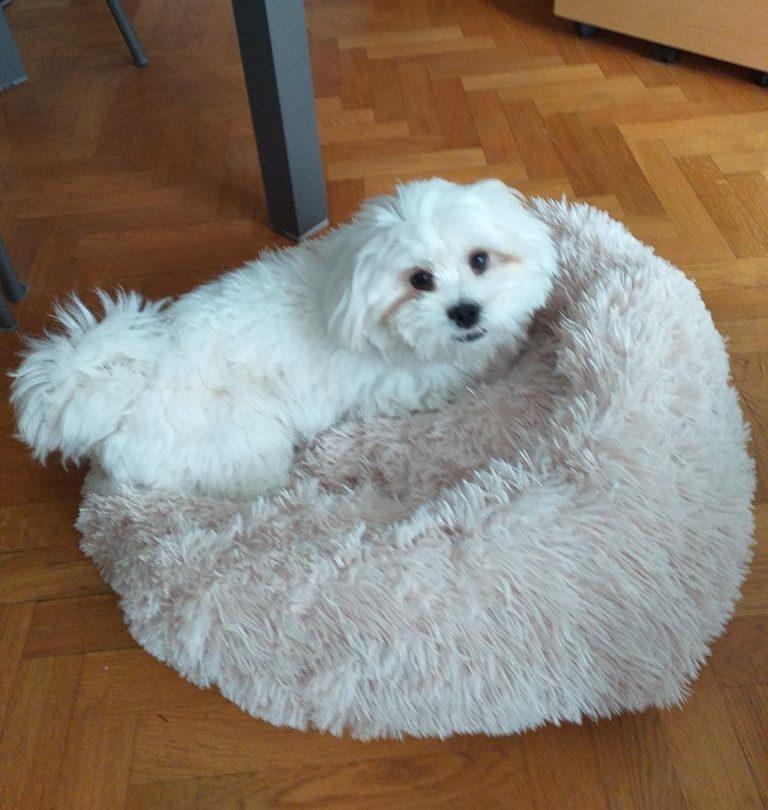 ComfySea™ - Lit pour chien photo review